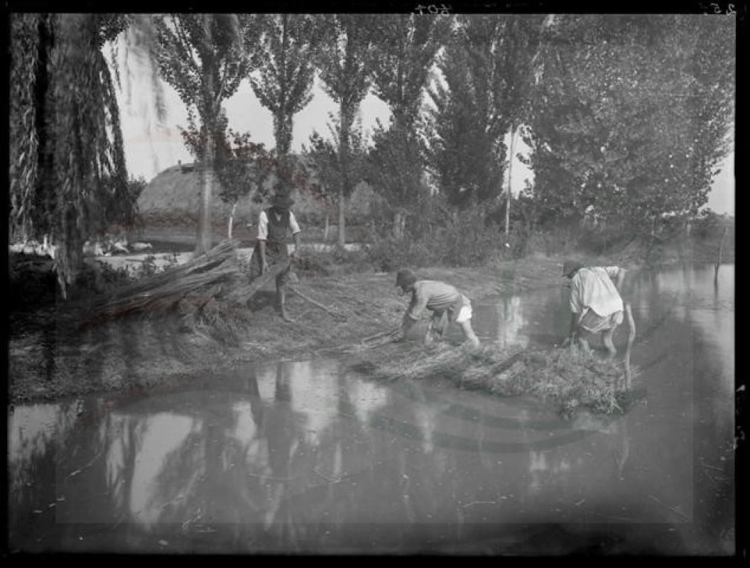 Kenderfeldolgozás. Kenderáztatás. A kévékbe kötött kenderkórókat a rostanyag fellazítása miatt vízben áztatták. A kévéket a vízbe levert cölöpök közé helyezték, így rögzítették.